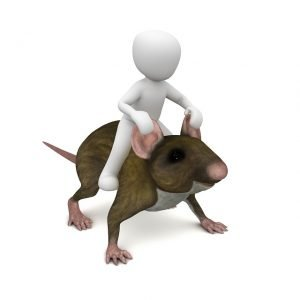 How To Get Rid Of A Rat In Your House learn rat run