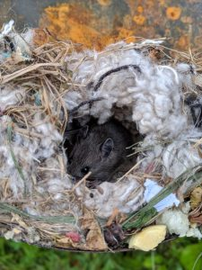 Where Do Mice Nest In A House nest example 2