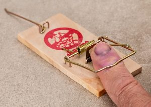 mistakes people make with mouse traps