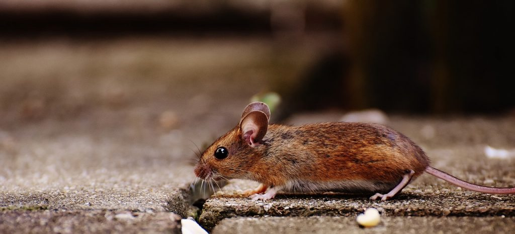 How To Stop Mice Getting Under Your Doors In 6 Steps