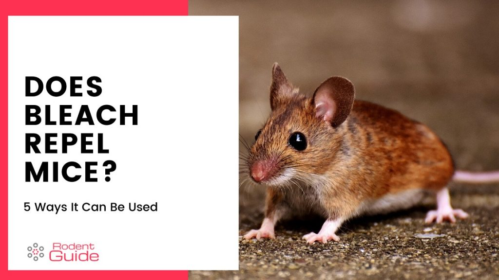 Does Bleach Repel Mice