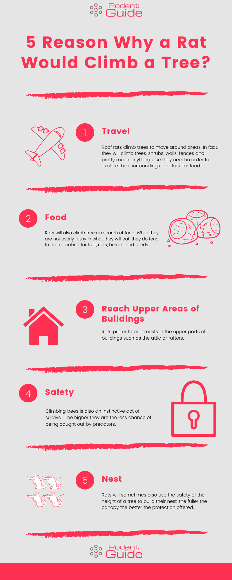 5 Reason Why a Rat Would Climb a Tree Infographic