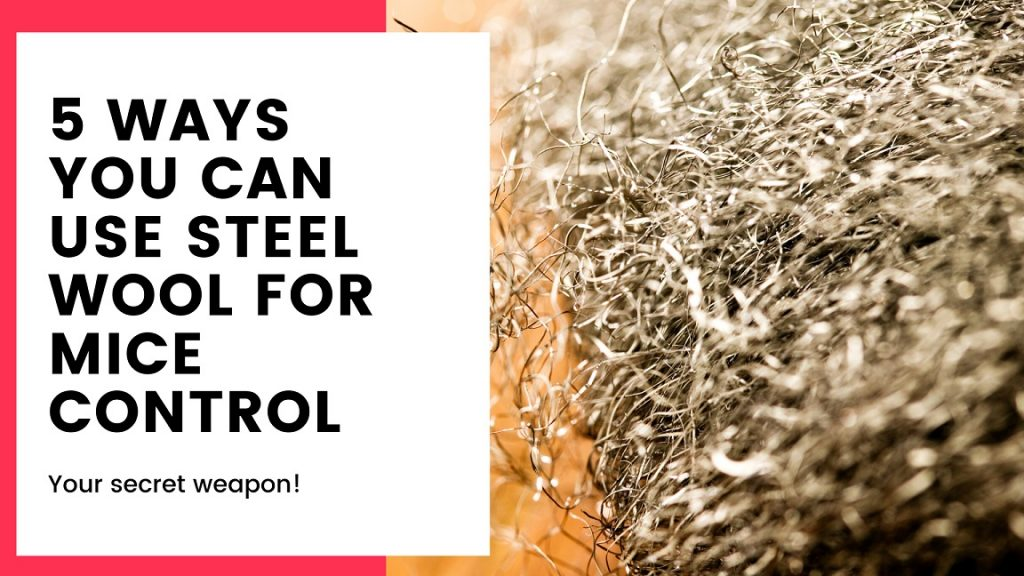 5 Ways You Can Use Steel Wool for Mice Control