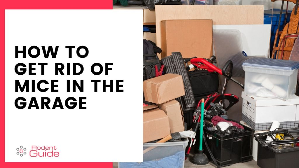 Get Rid of Mice in The Garage