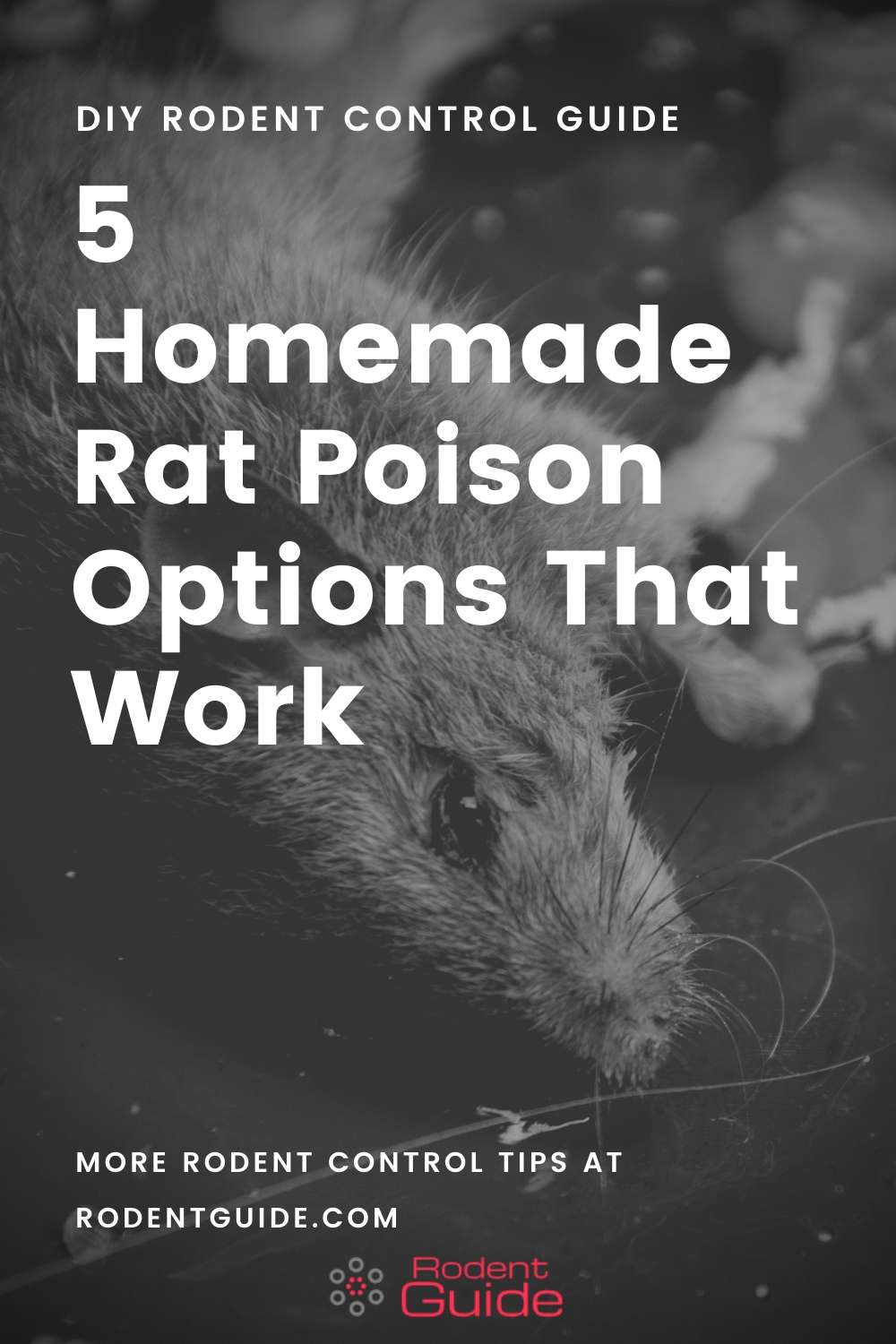5 Homemade Rat Poison Options That Work