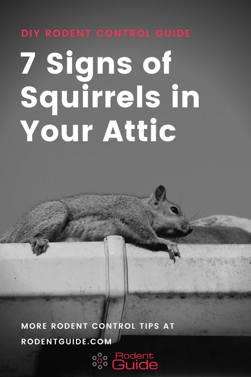7 Signs of Squirrels in Your Attic