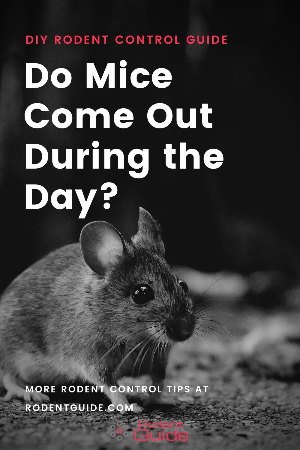 Why Do Mice Come Out During the Day